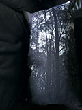 forestthumbnail