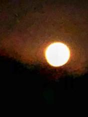 moonfinal