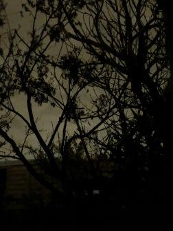 grey night